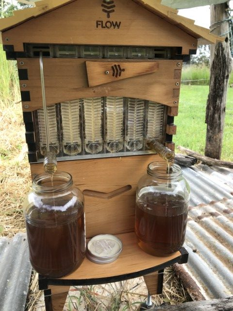 bee honey harvest flowhive
