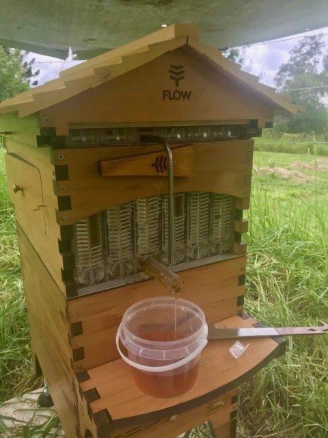 flowhive bee honey harvest